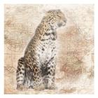 African Animals - Leopard