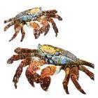 Winter Crabs