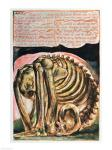Book of Urizen; the creation of Urizen in material form by Los, 1794