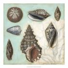 Antique Shell Collage I