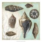 Antique Shell Collage II