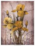 Golden Irises II