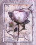 Love Letter Peonies