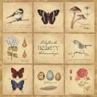Beauty 9 Patch