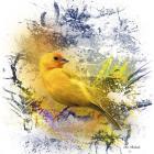 Bird Collection 12
