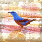 Bird Collection 14