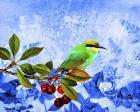 Bird Collection 16