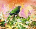 Bird Collection 17