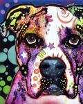American Bulldog 1