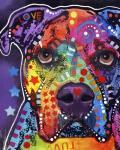 American Bulldog 3