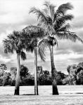 3 Trees of Scenic Beauty
