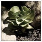 A Little Green Plant
