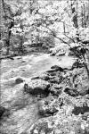 Along The Stream - Fall