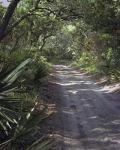 #196  Sandy Lane