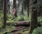 237 Olympic NP
