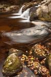 Autumn Swirly