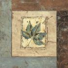 Botanica IV