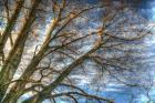 Bare Branches 2
