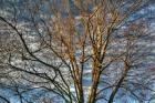 Bare Branches 3