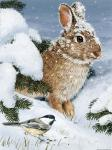 Winter Cottontail And Friend