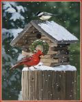 Cardinal / Chickadee In Snow