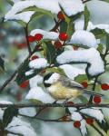 Chickadees And Holly Branch