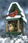 Cardinals And Birdhouse In Snow