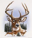 Whitetail Deer Montage/ Winter