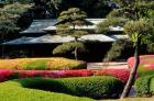 Azaleas at the Imperial Palace East Gardens, Tokyo, Japan