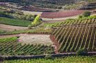 Vineyards, Bobadilla, Spain
