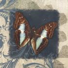Swirl Butterfly I