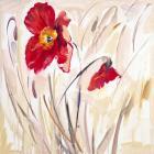 Wild Poppy IV