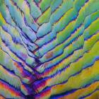Fan Palm Abstract