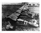 Albatos D.III  Squadron