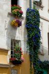 Building with flower pots on each window, Rue Des Arenes, Arles, Bouches-Du-Rhone, Provence-Alpes-Cote d'Azur, France
