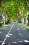 Allee of trees, St.-Remy-De-Provence, Bouches-Du-Rhone, Provence-Alpes-Cote d'Azur, France