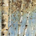 White Forest IV