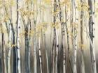 Golden Birch III