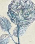Belle Fleur III Crop