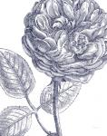 Belle Fleur III Light Crop