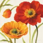 Poppies Melody III