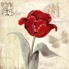 Tulip Gem I