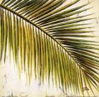 Baru Palm III