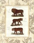 African Animals IV