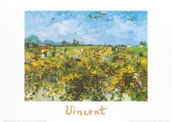 The green vineyard | Obraz na stenu