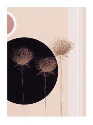 Three Dandelions on black circle | Obraz na stenu
