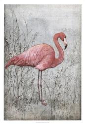 American Flamingo I | Obraz na stenu
