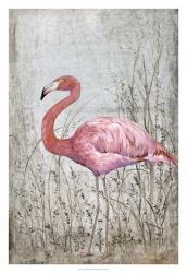 American Flamingo II | Obraz na stenu