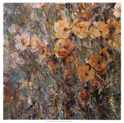 Amber Poppy Field I   Obraz na stenu