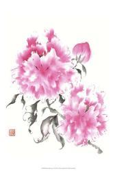 Peonie Blossoms I   Obraz na stenu